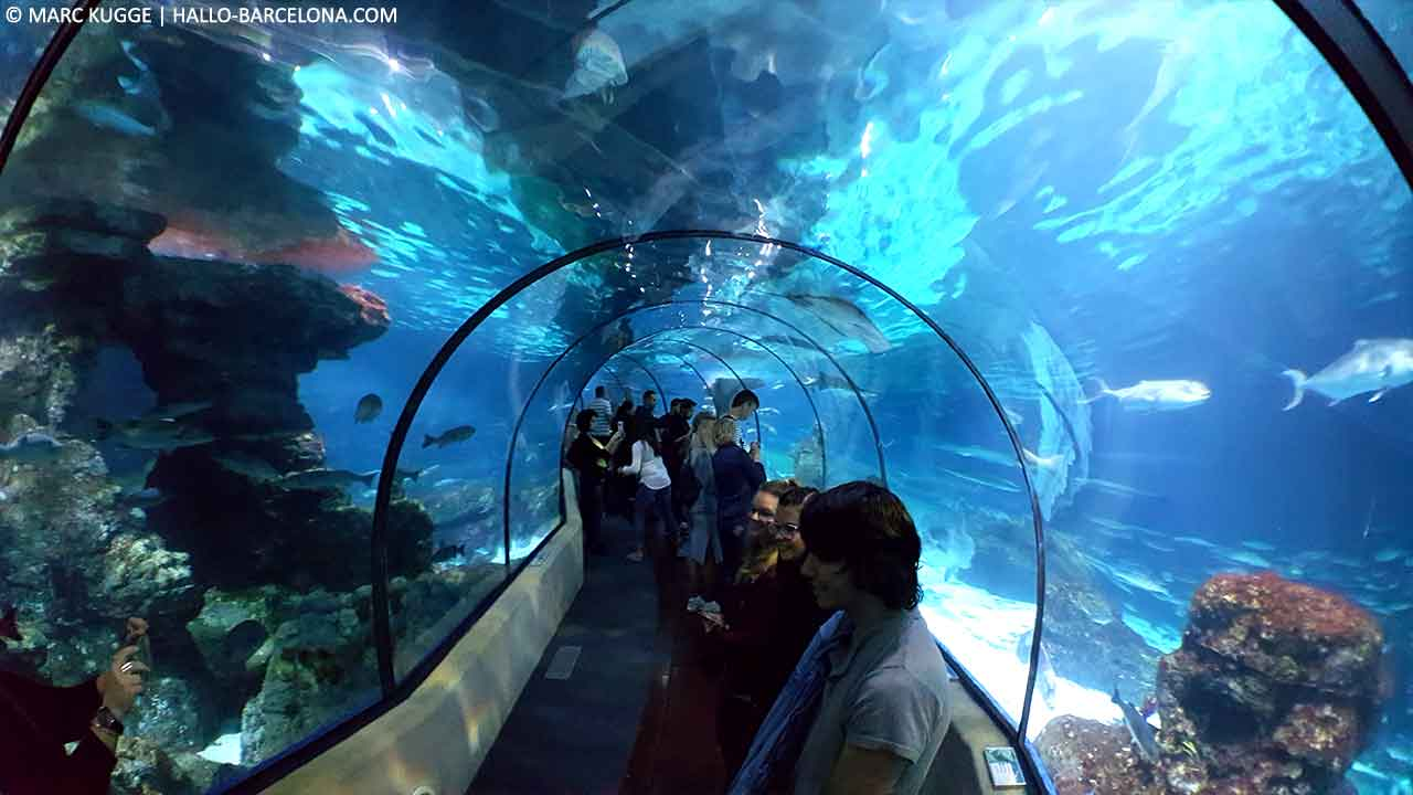 Aquarium in Barcelona 2018
