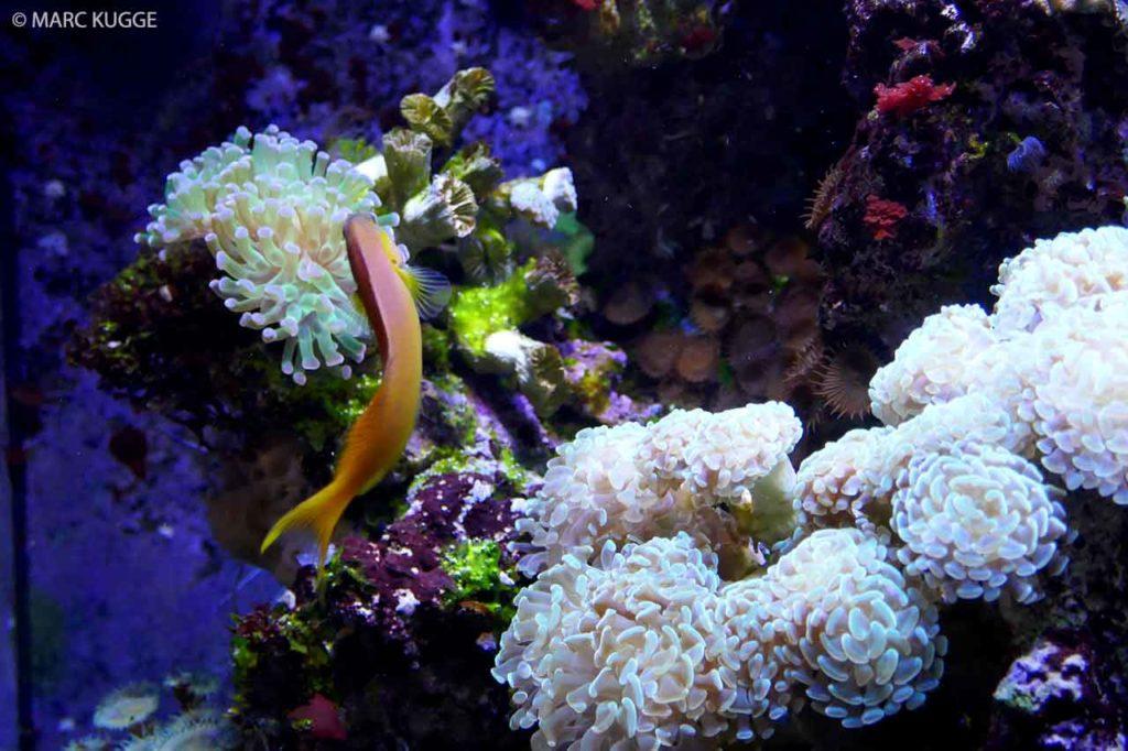 Aquarium Barcelona: Preise, Eintritt, Öffnungszeiten & Infos